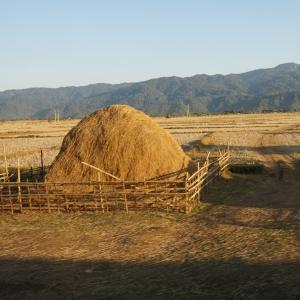 Rice Hay Stack-Myanmar